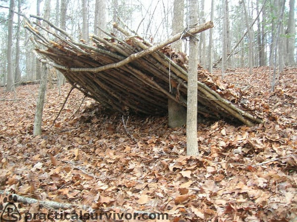 Types Of Lean To Shelter : Survival myths that could kill you