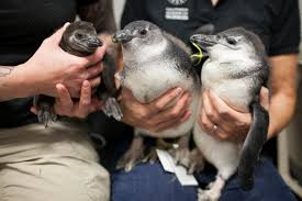 captive breeding can be a seriously complicated process