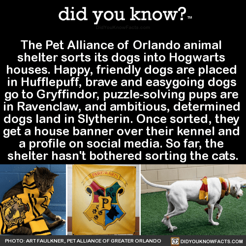 the-pet-alliance-of-orlando-animal-shelter-sorts - did you know?